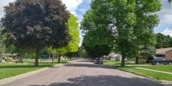 Trees along a road