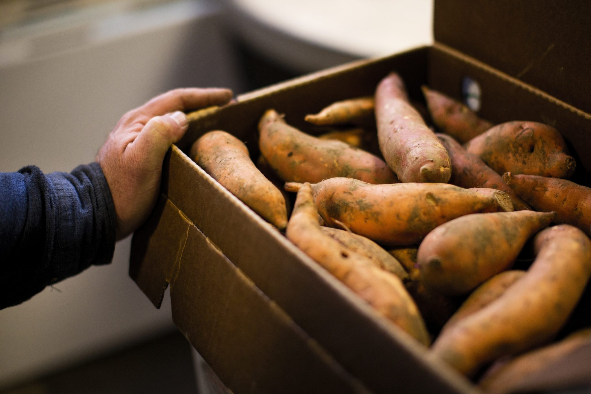 Sweet potatoes sit in a box at a farm