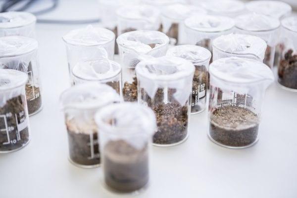 Soil samples in lab