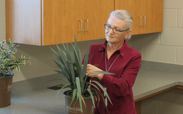 Marla Faver, Regional Extension Agent, inspects plants at the Gulf Shores Diagnostic Lab.