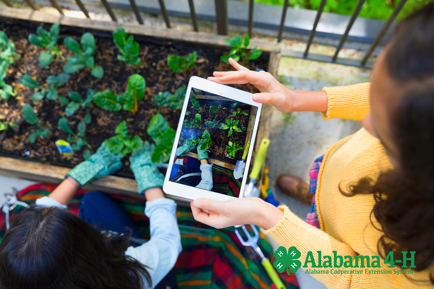 Alabama 4-H Grows participation