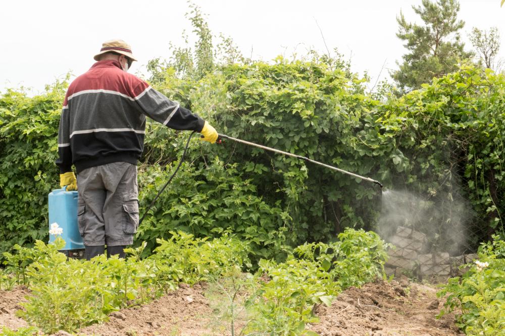 Man using a hand pesticide sprayer.