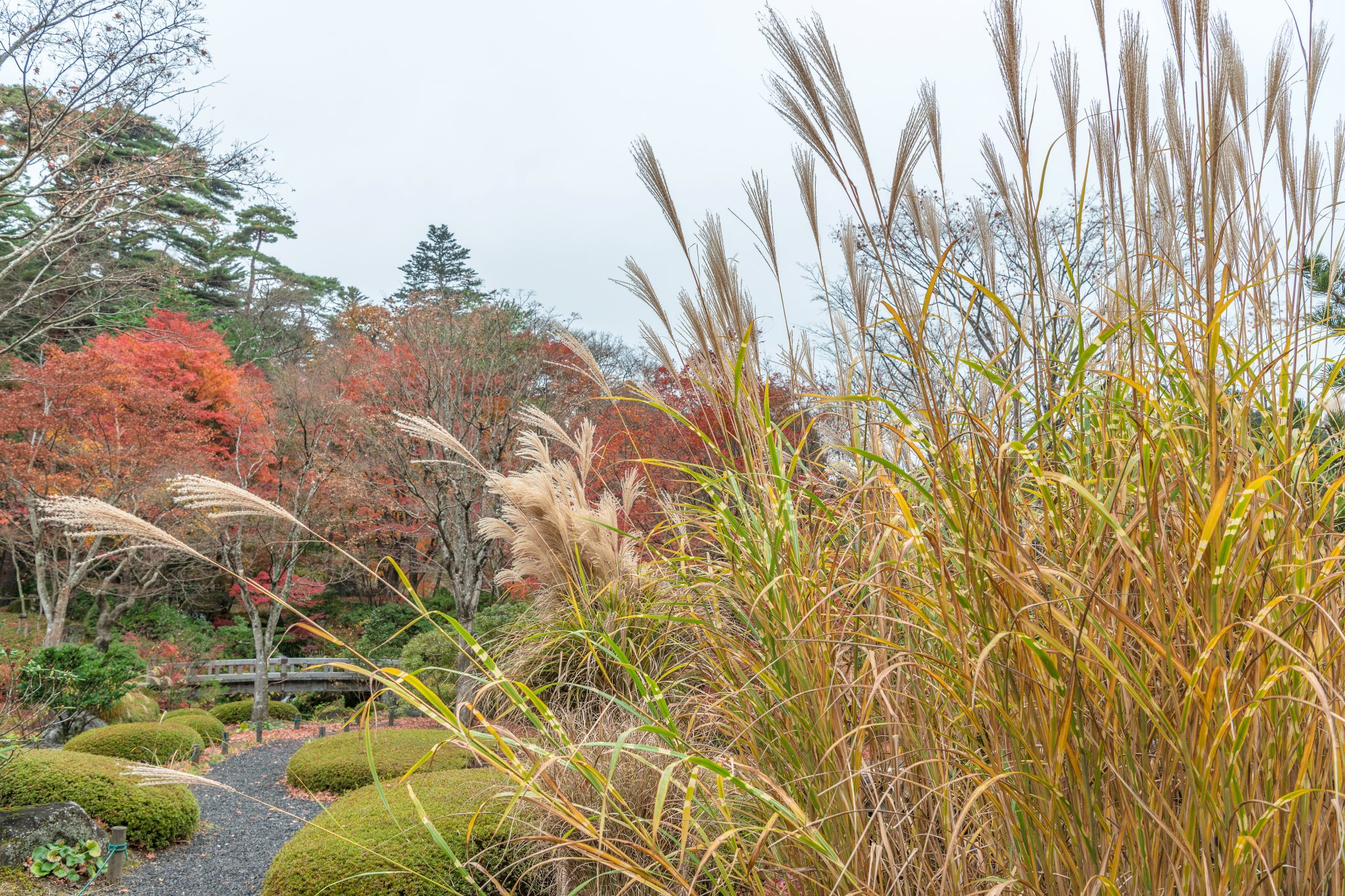 Ornamental Grasses in a landscape