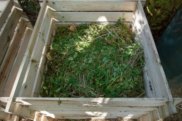 A composting bin with lawn clippings.