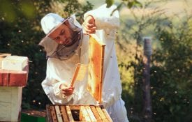 A beekeeper with his hives.