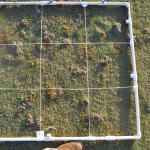 Figure 13. Testing for damage ratings is performed on 1 x 1 meter squares of soil.