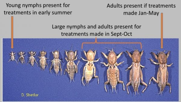 "Figure 21. ""Mole cricket damage may warrant treatment at egg hatch and in fall of one year and again in spring (about February) of the following year. (Image credit: D. Shetlar, The Ohio State University)"