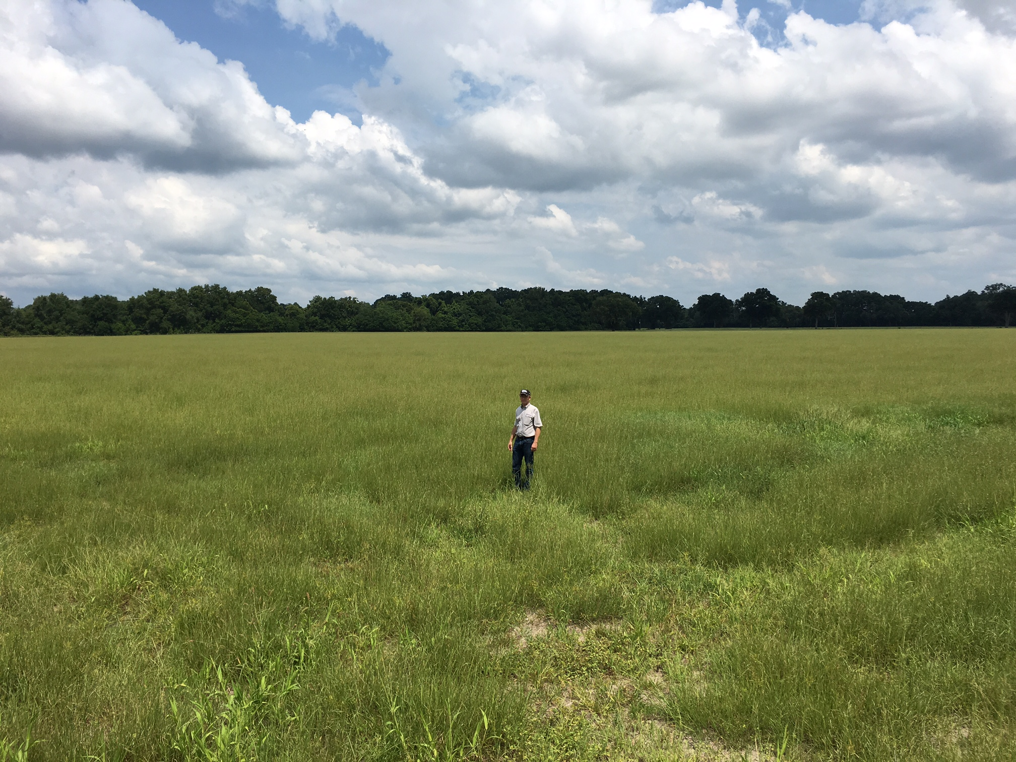 Man standing in a field with Brunswickgrass.