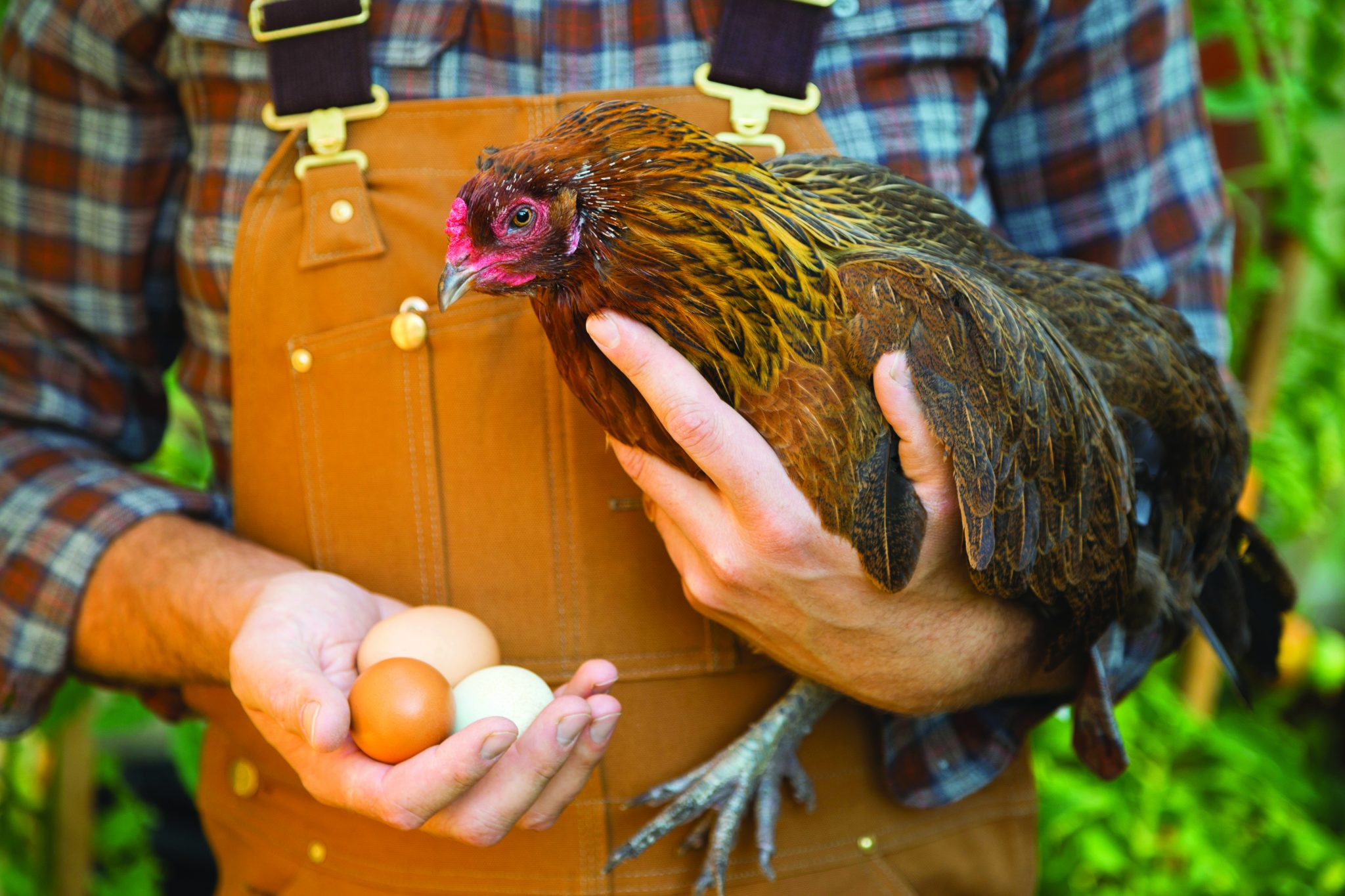 Man holding chicken and eggs.