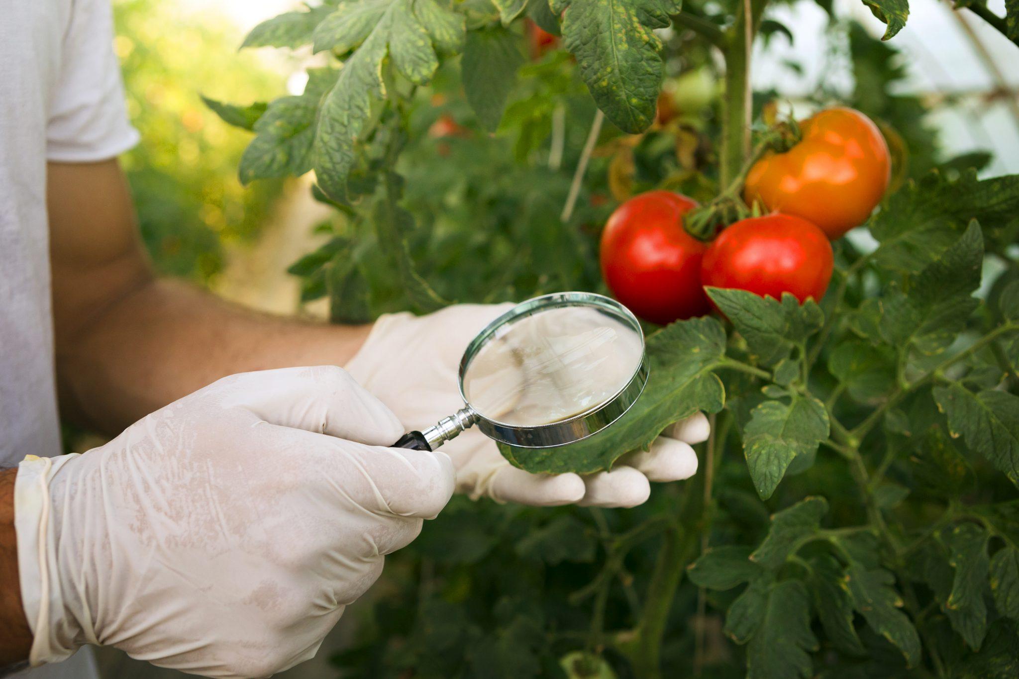 bugs in vegetable gardens
