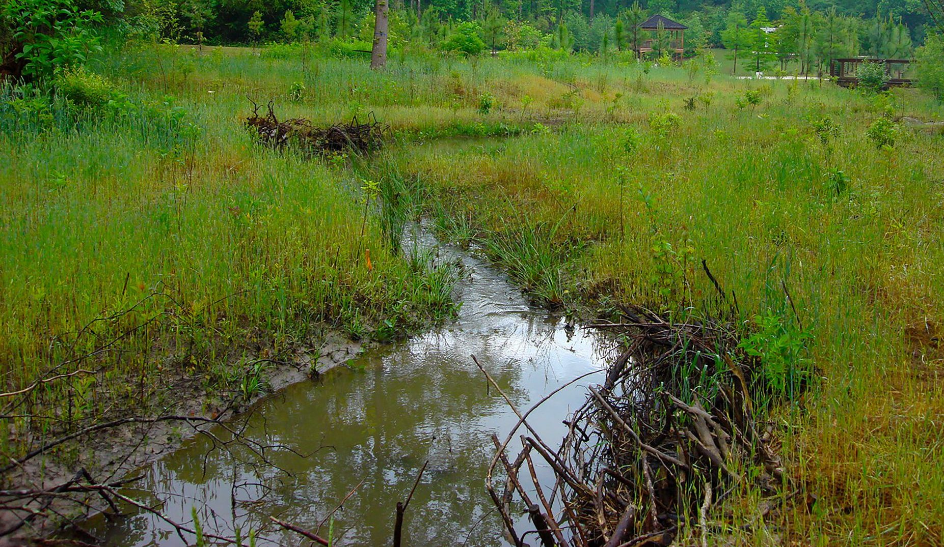 view of stream and wetlands