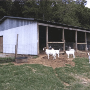Figure 2. Semi-enclosed barn with potential for additions and modifications (Photo by Sydne and Robert Spencer, Spencer's Farm)