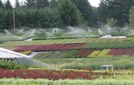 Overhead Irrigation Container Nursery