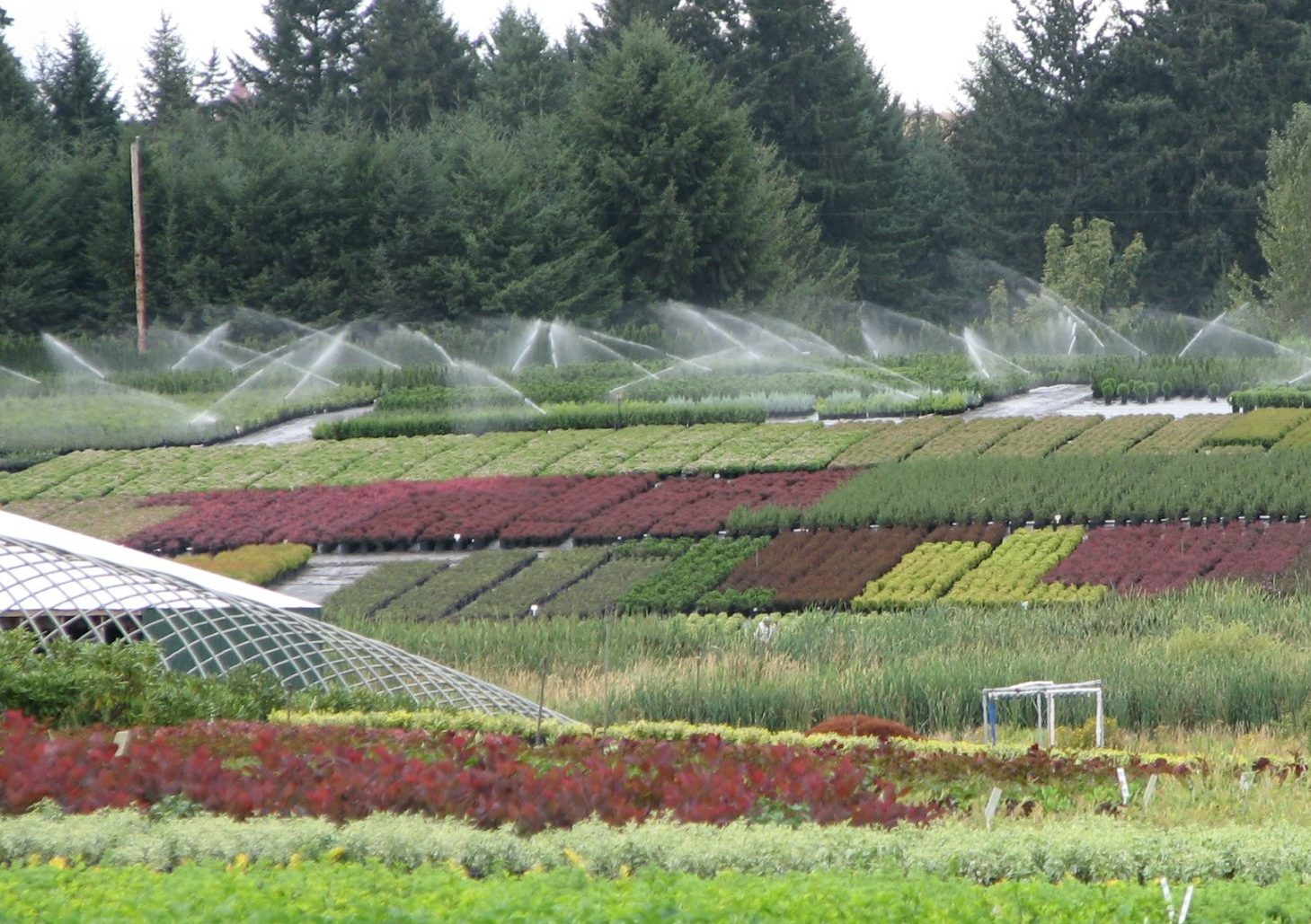 Overhead Irrigation Container Nursery