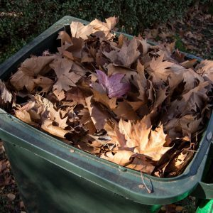 Fall leaves collected in a green garden waste bin