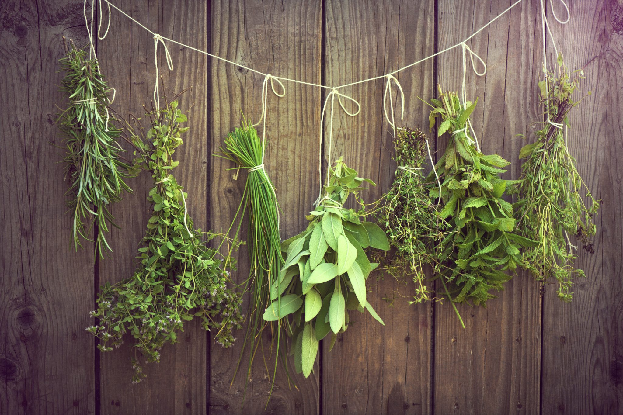 Herb bunches hanging on rope against wooden fence
