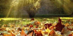 Sunshine with fall leaves