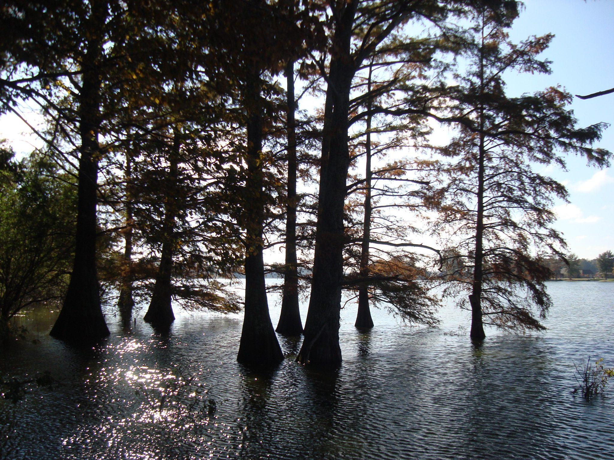 Cypress trees along Alabama River