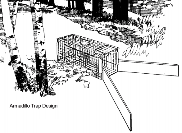 Armadillo Trap Design