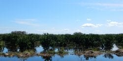 flooded orange grove from a distance, food crop resources