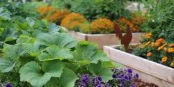 alabama vegetable gardener
