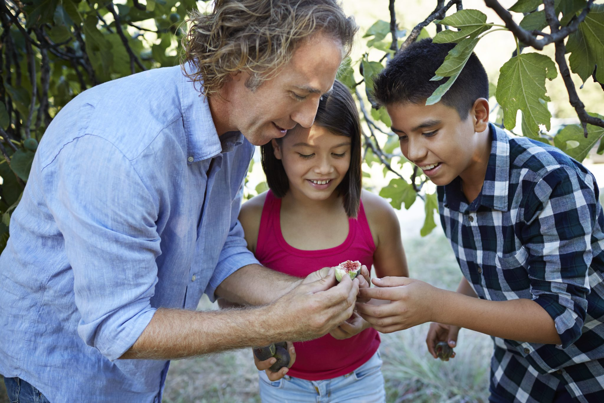 Father showing his children how to open fresh fig