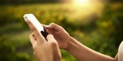 Hands holding a cell phone with vegetation in background, digital resources