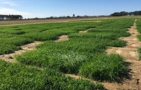Small grain variety trials