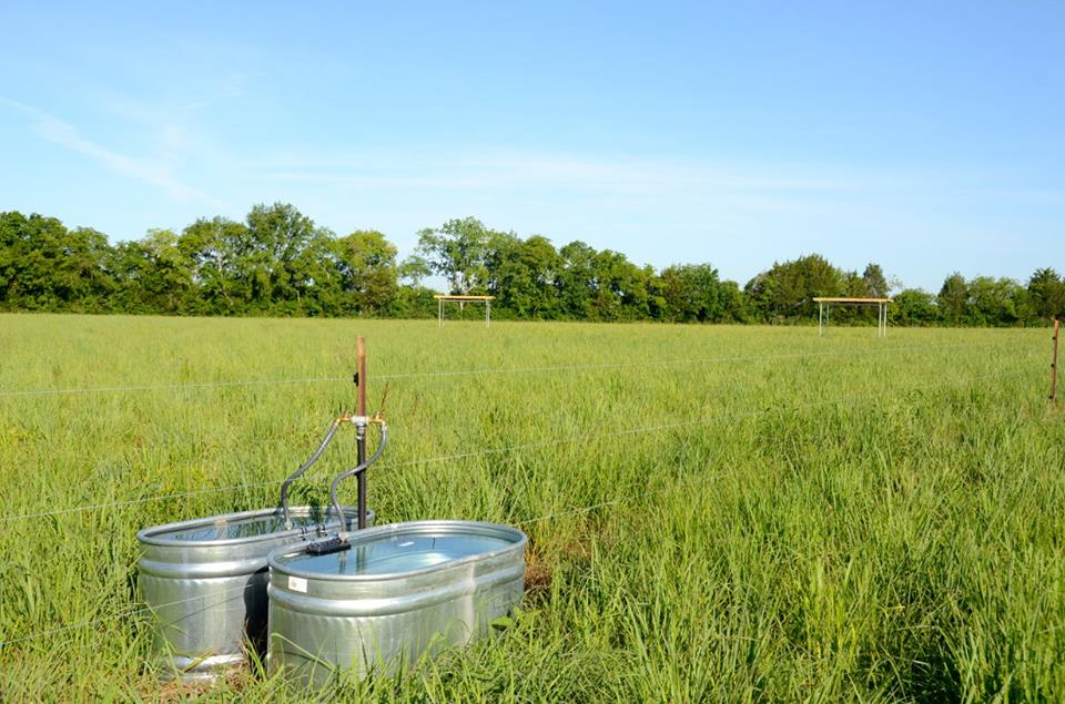 Water tanks for livestock in a pasture