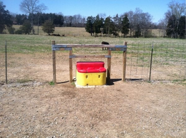 Water tank for livestock.