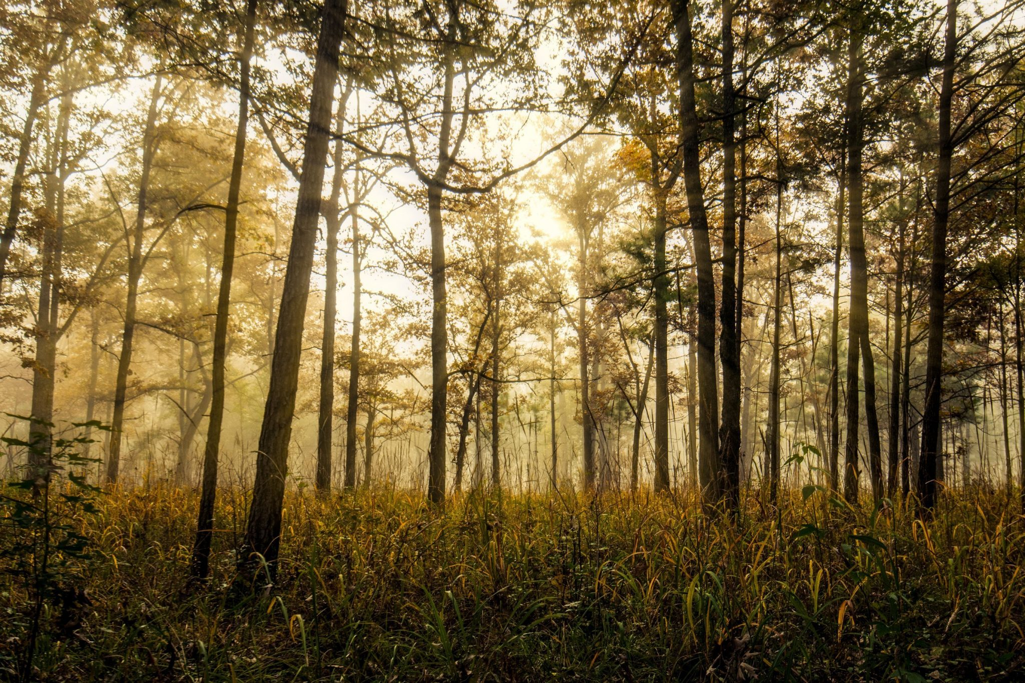 Alabama Forest