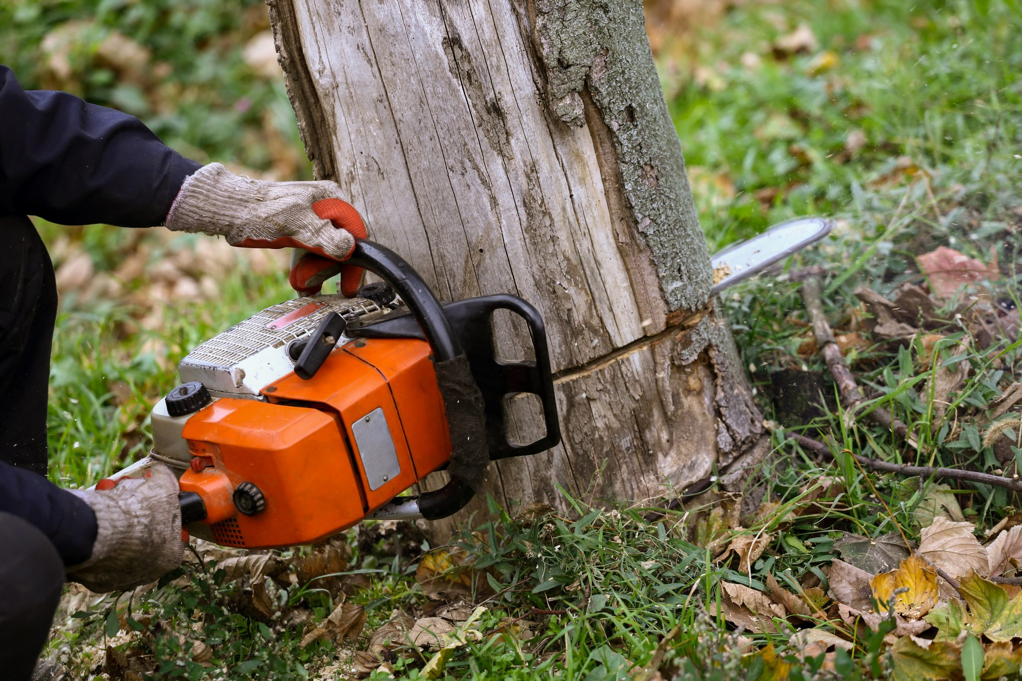 using chainsaw to cut down tree
