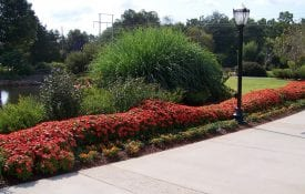A sunny annual border planted with New Guinea impatiens and ornamental peppers