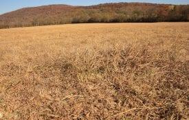 dry hayfield