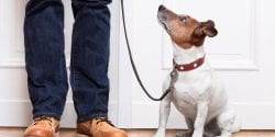 Owner standing next to small dog on a leash