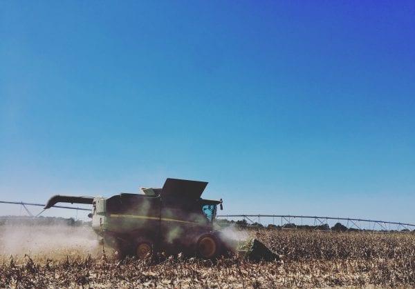 combine combining corn.