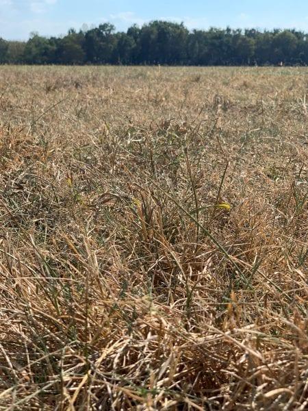 Dry Pasture