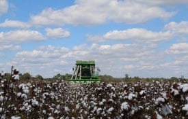 Practice harvest safety when harvesting cotton.