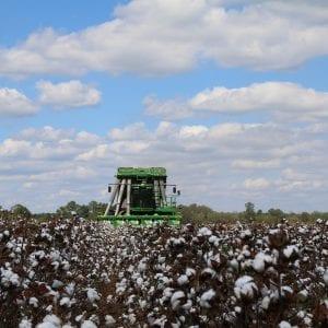 Practice harvest safety when harvesting cotton.