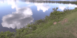 A fish pond dam.