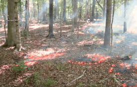 An example of a point source fire.