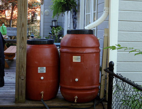 Rain Barrels collect rainwater from rooftops
