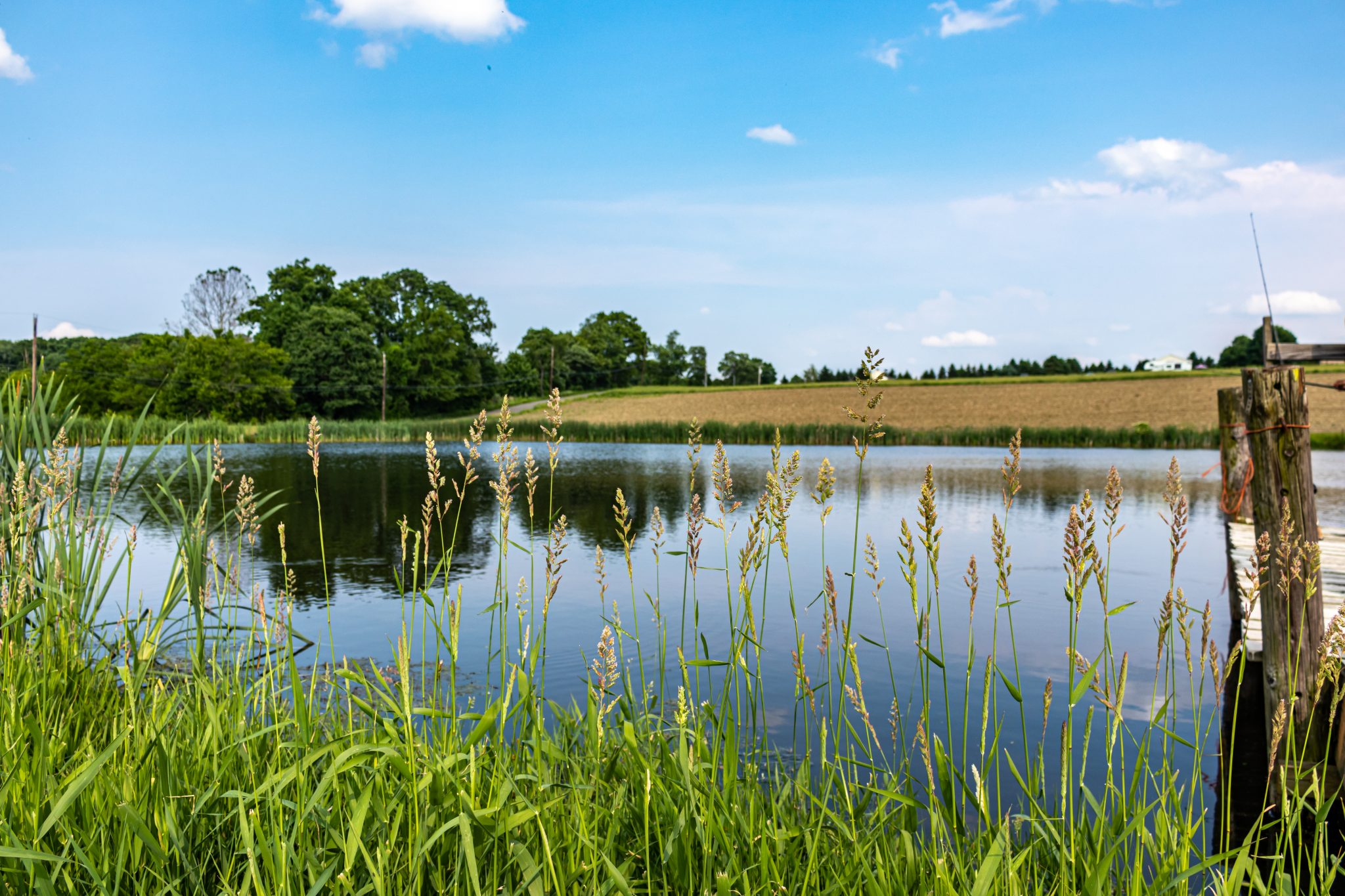 Pond in a pasture