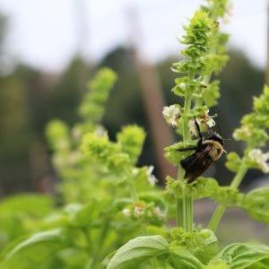 Autauga County Master Gardener demonstration garden
