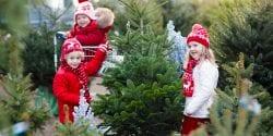 Children picking a Christmas tree