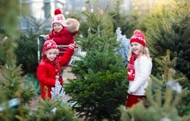 Children picking a Christmas tree