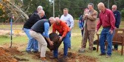 Planting tree in Beauregard