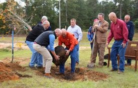 Planting tree in Beauregard