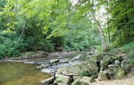 Stream in Bankhead National Forest