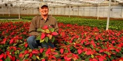 Poinsettias part of greenhouse industry in Alabama